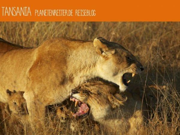 Reiseblog Safari und Tansania