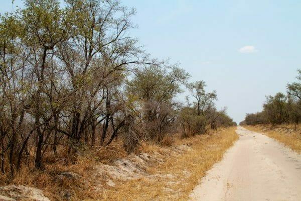 Chobe NP Botswana: Nach Savute. Botswana Camping