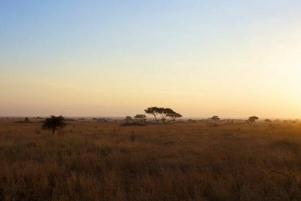 Tansania für Anfänger