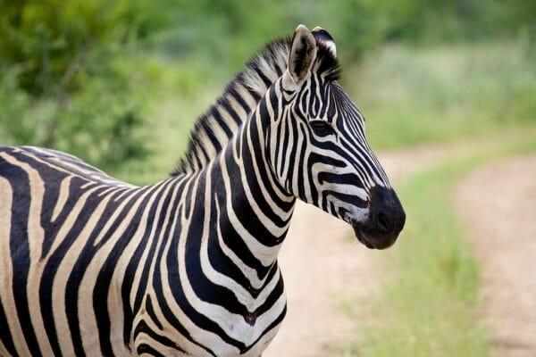 Beste Kamera und Objektive für Safari