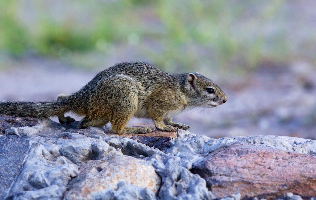 Little Animals Safari: Tree Squirrel