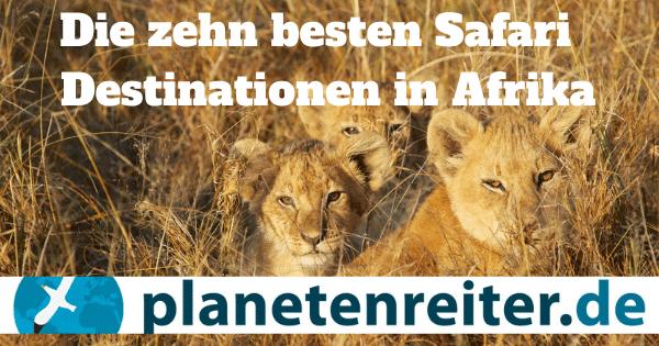 Beste Safaritipps Afrikas: Anreise, Kosten, Tiere