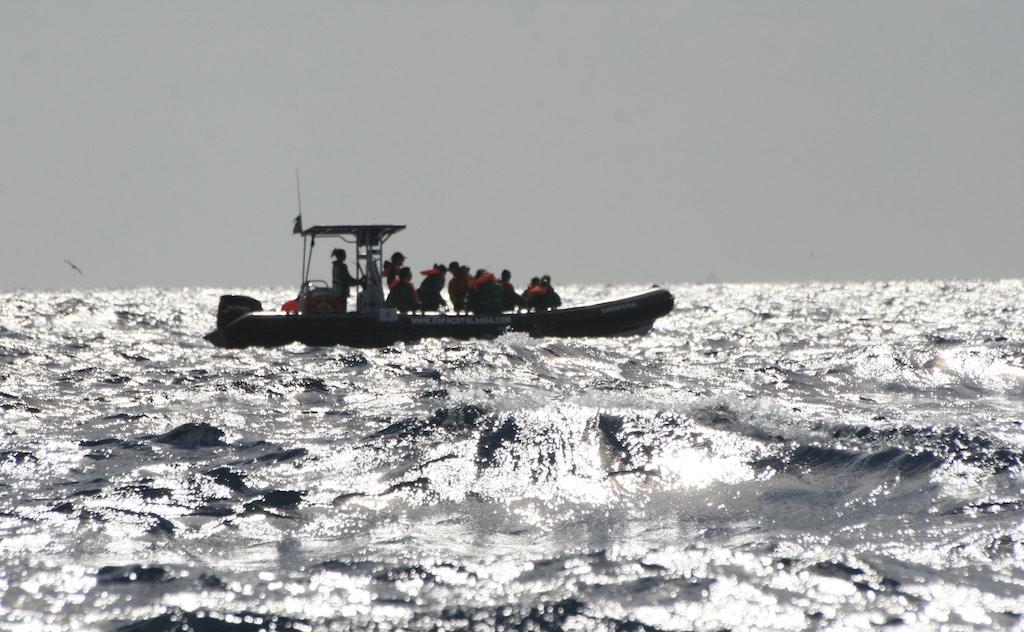 Azoren Reisetipps: Whale Watching vor Pico