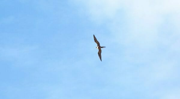 San Cristobal für Birder