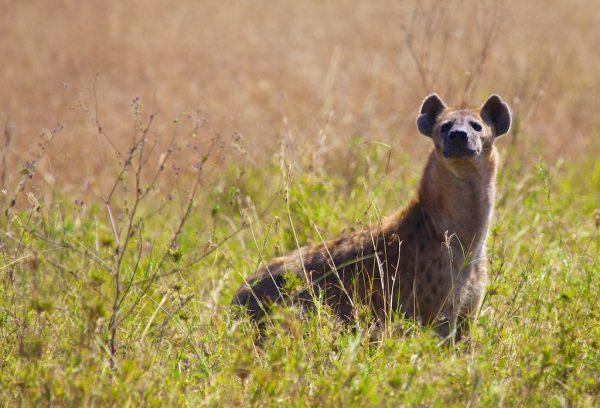 Safari-Nationalparks in Afrika