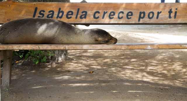 Reiseblog Galapagos
