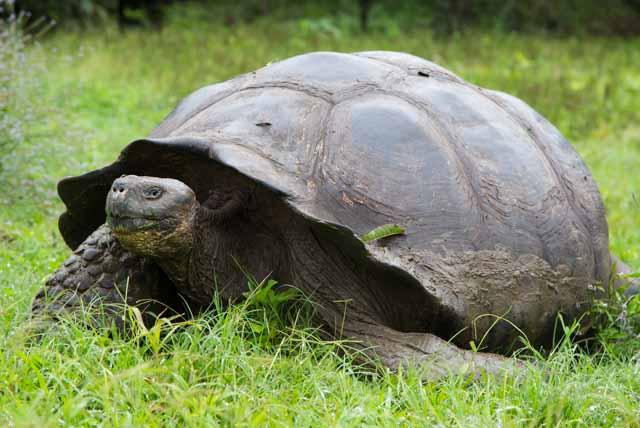 Galapagos Reisetipps