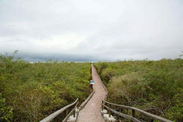 Galapagos Santa Cruz: Pfad zum Playa Tortuga