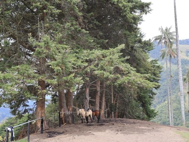 Kolumbien Reiseblog Cocora Valley