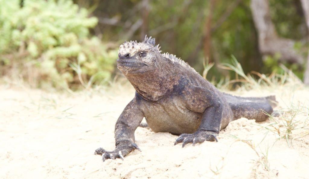 Galapagos Reiseblog: Individuell unterwegs