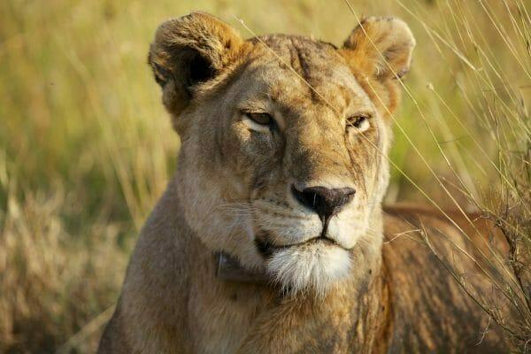 Safari Fotorgafie
