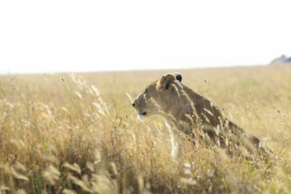 Safari Fotografie