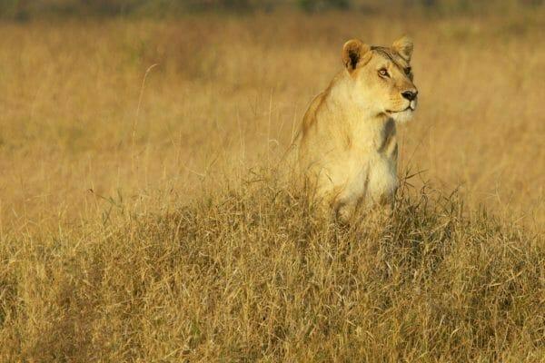 Serengeti Safari Reisetipps für Traveller